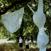「The big bra」Yoshikazu Yamagata 2004 (photo: Koomi Kim)